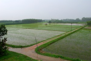 Punjab_Monsoon